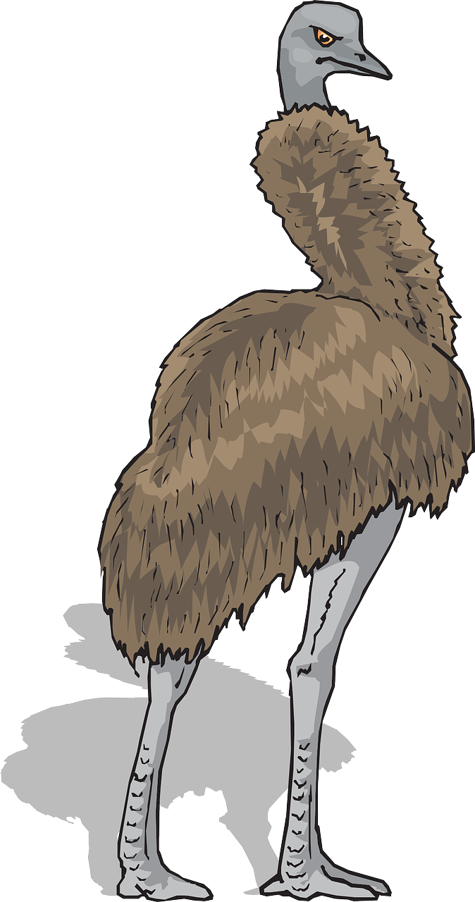 brown,shadow,bird,standing,feathers,emu,free vector graphics,free pictures, free photos, free images, royalty free, free illustrations, public domain