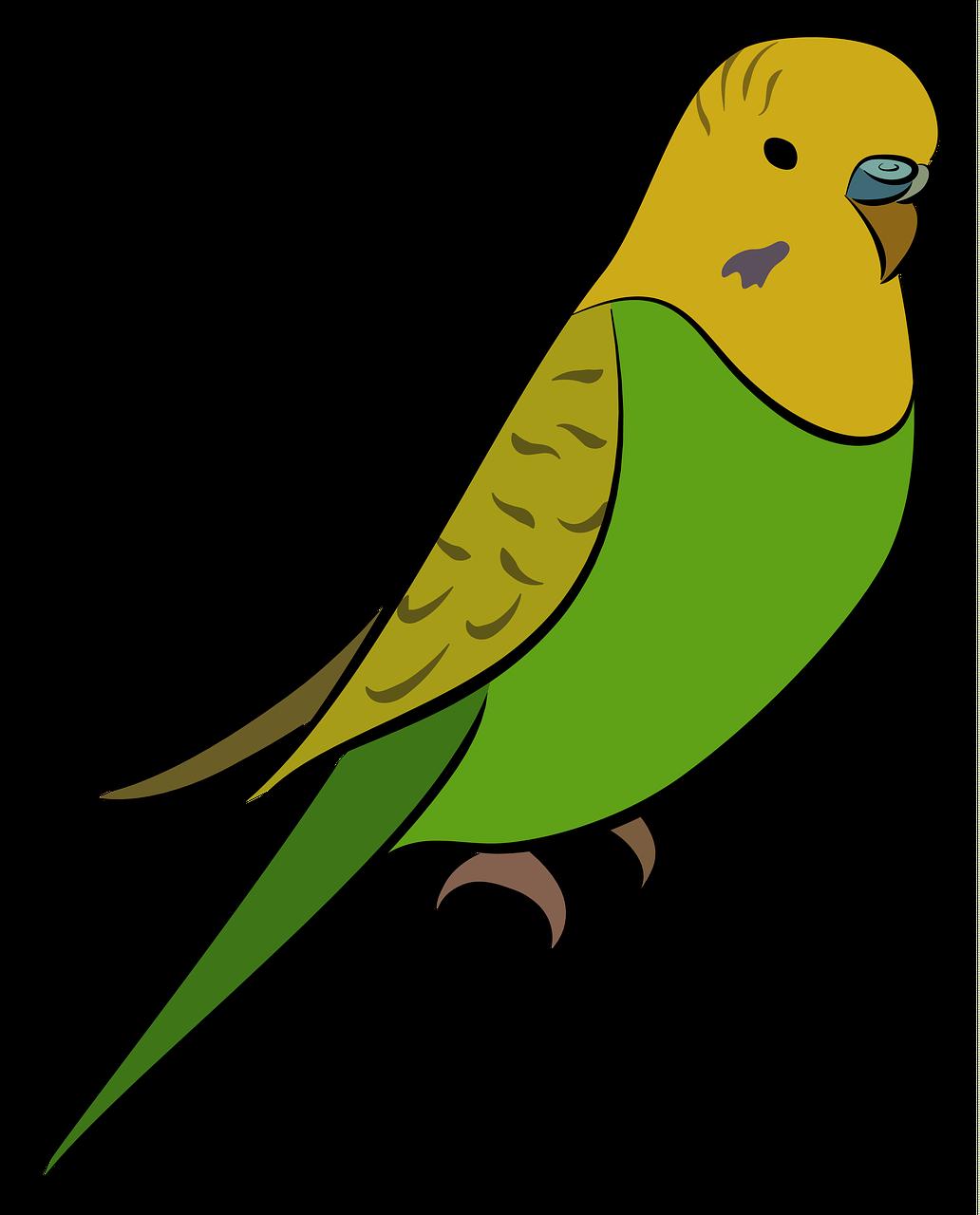 Budgie Parakeet Bird Pet Yellow Free Image From Needpix Com