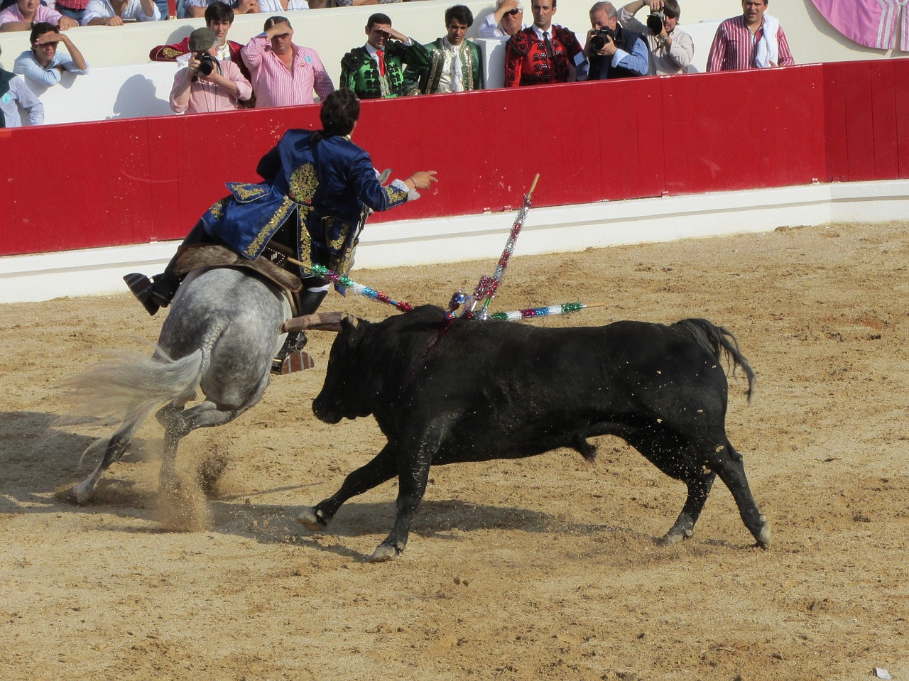Bull fighting,torero,portugal,bullfighter,free pictures