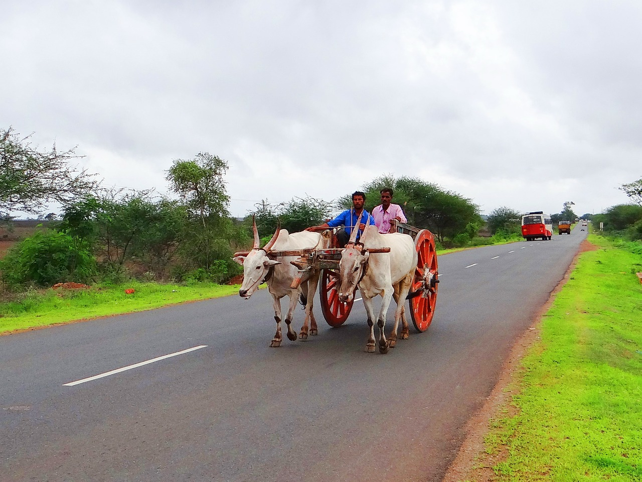 bullock cart,karnataka,india,gadag,hubli,highway,rural,country,road,countryside,free pictures, free photos, free images, royalty free, free illustrations, public domain