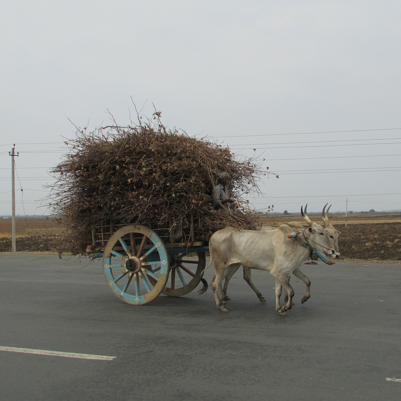 bullock cart ox waggon waggon free photo