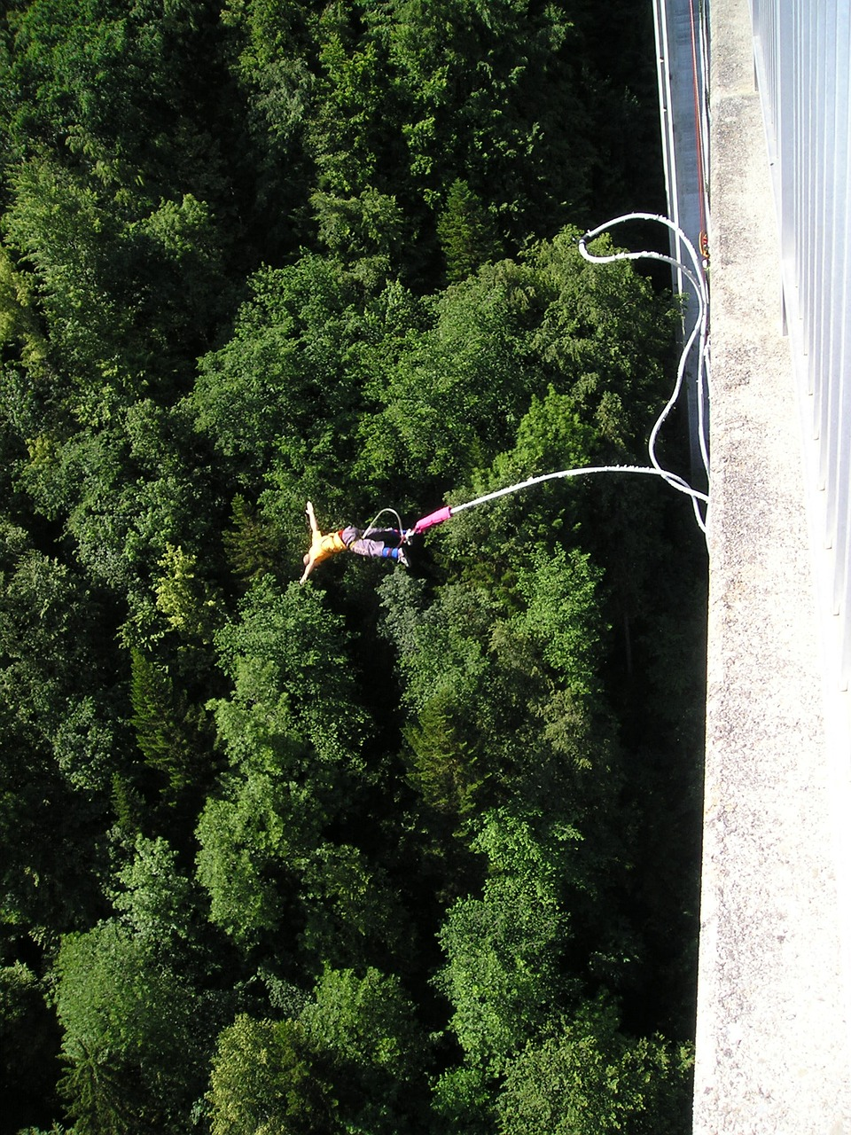 bungy bungee extremely free photo
