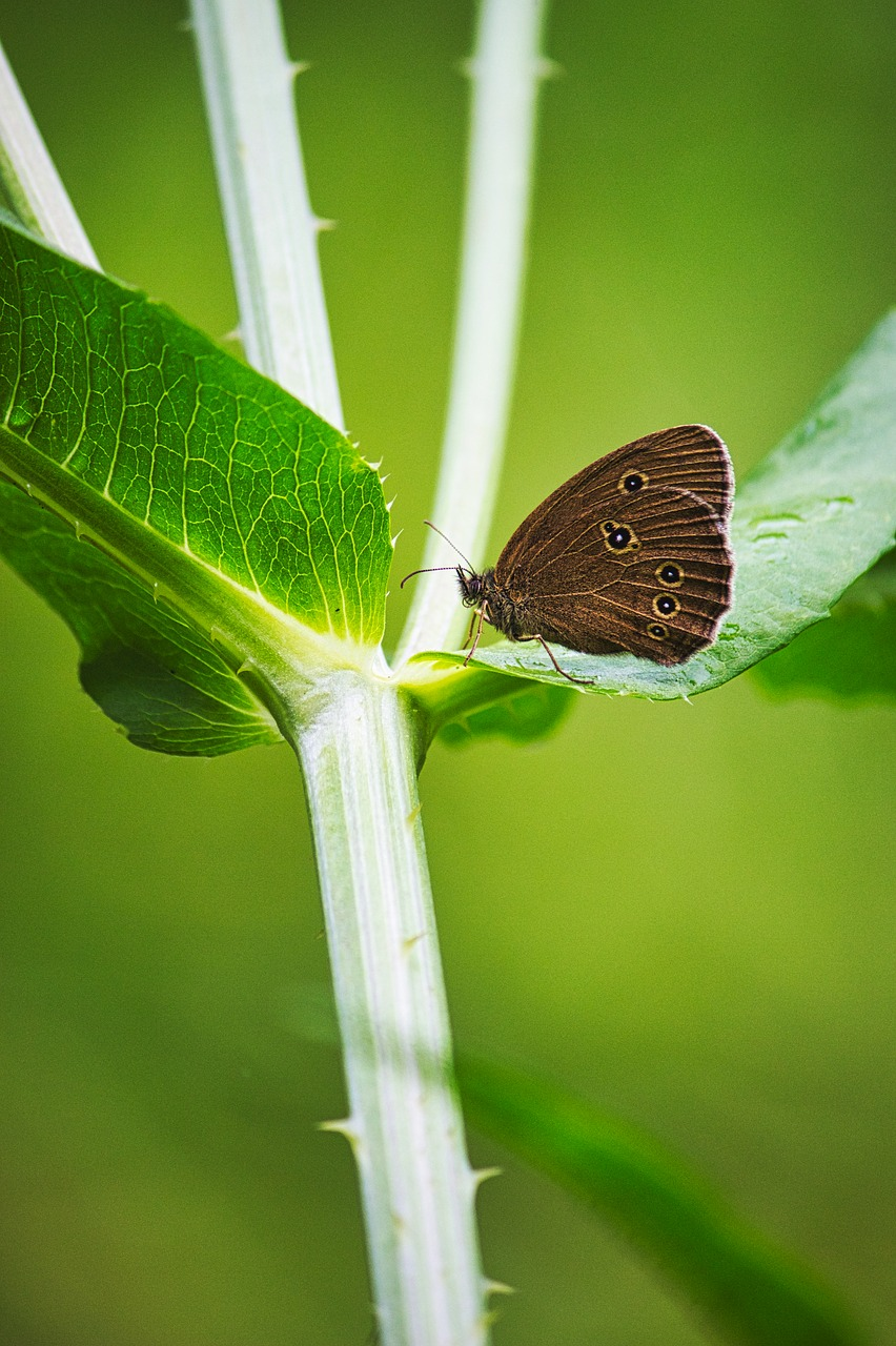 butterflies  butterfly  nature free photo