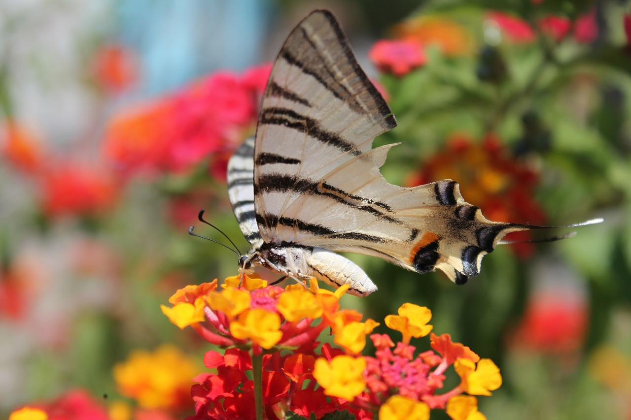 butterfly flower spring free photo