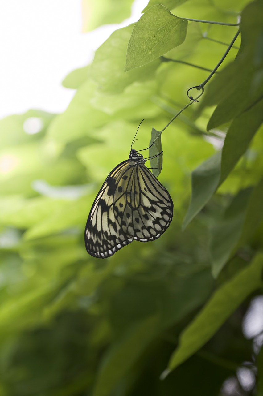 butterfly,green,leaves,nature,life,fragile,butterflies,free pictures, free photos, free images, royalty free, free illustrations