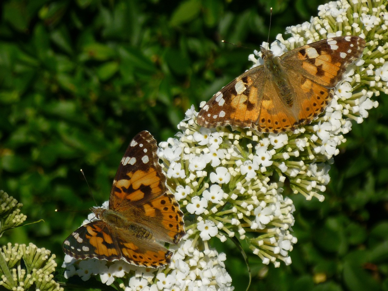 butterfly garden nature free photo