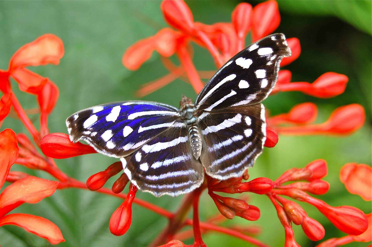 butterfly insects butterflies free photo