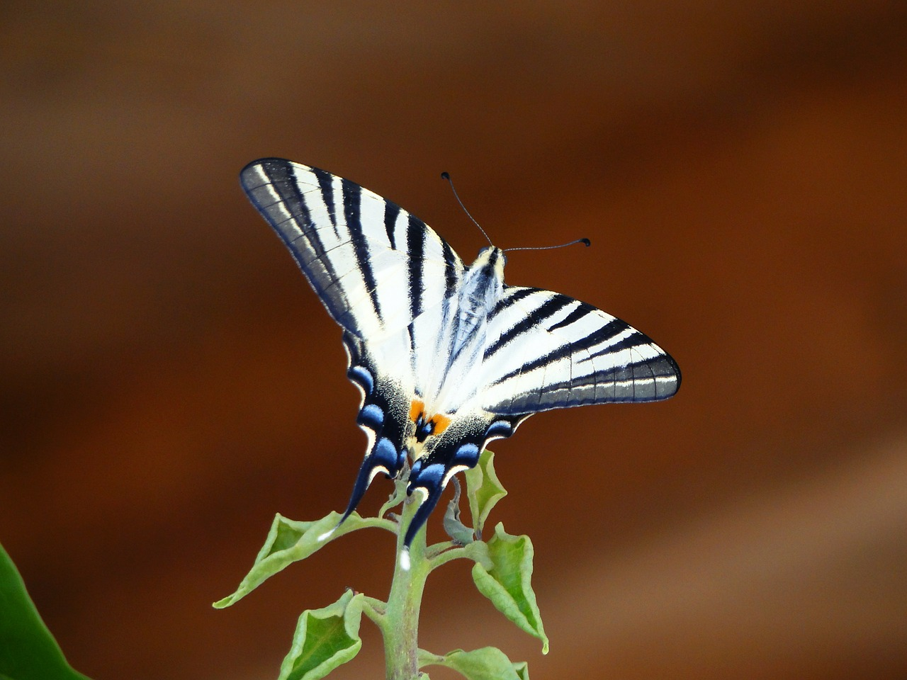 butterfly wing animal free photo