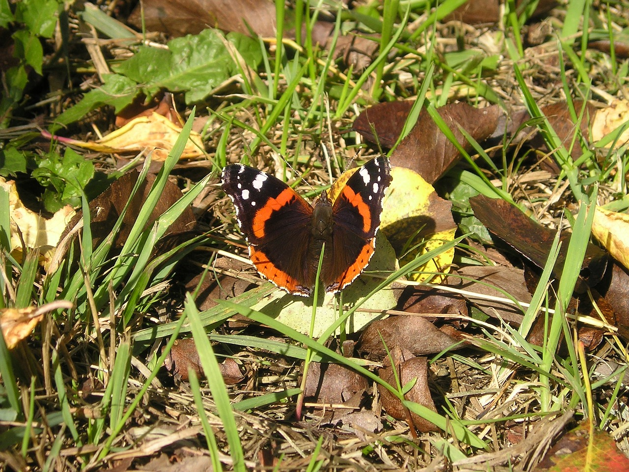 butterfly nature france free picture