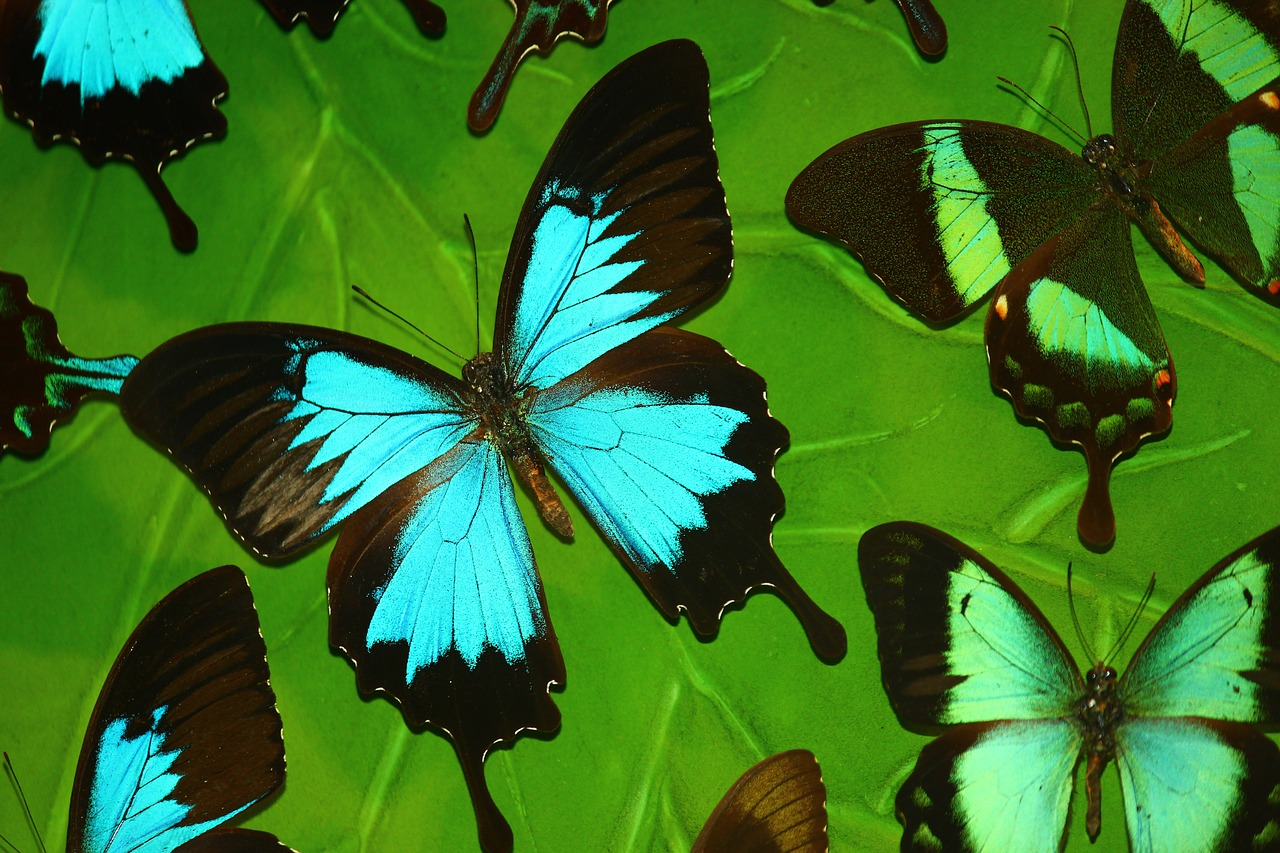 butterfly tropical butterfly turquoise free photo