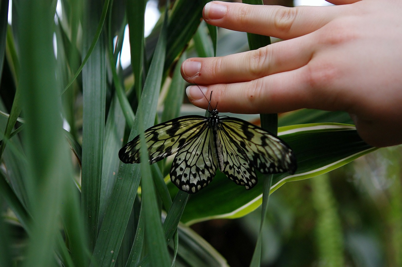 butterfly animal hand free photo