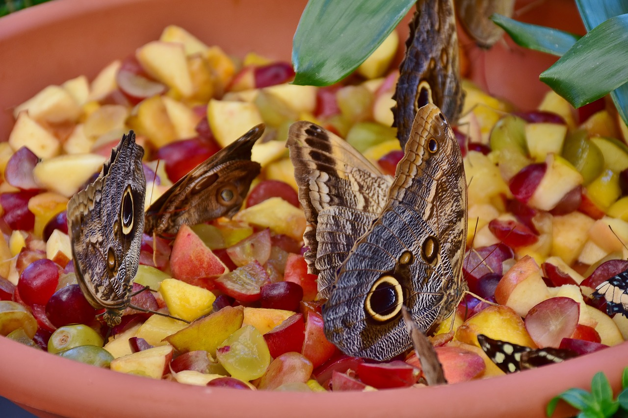 butterfly owl butterfly edelfalter free photo