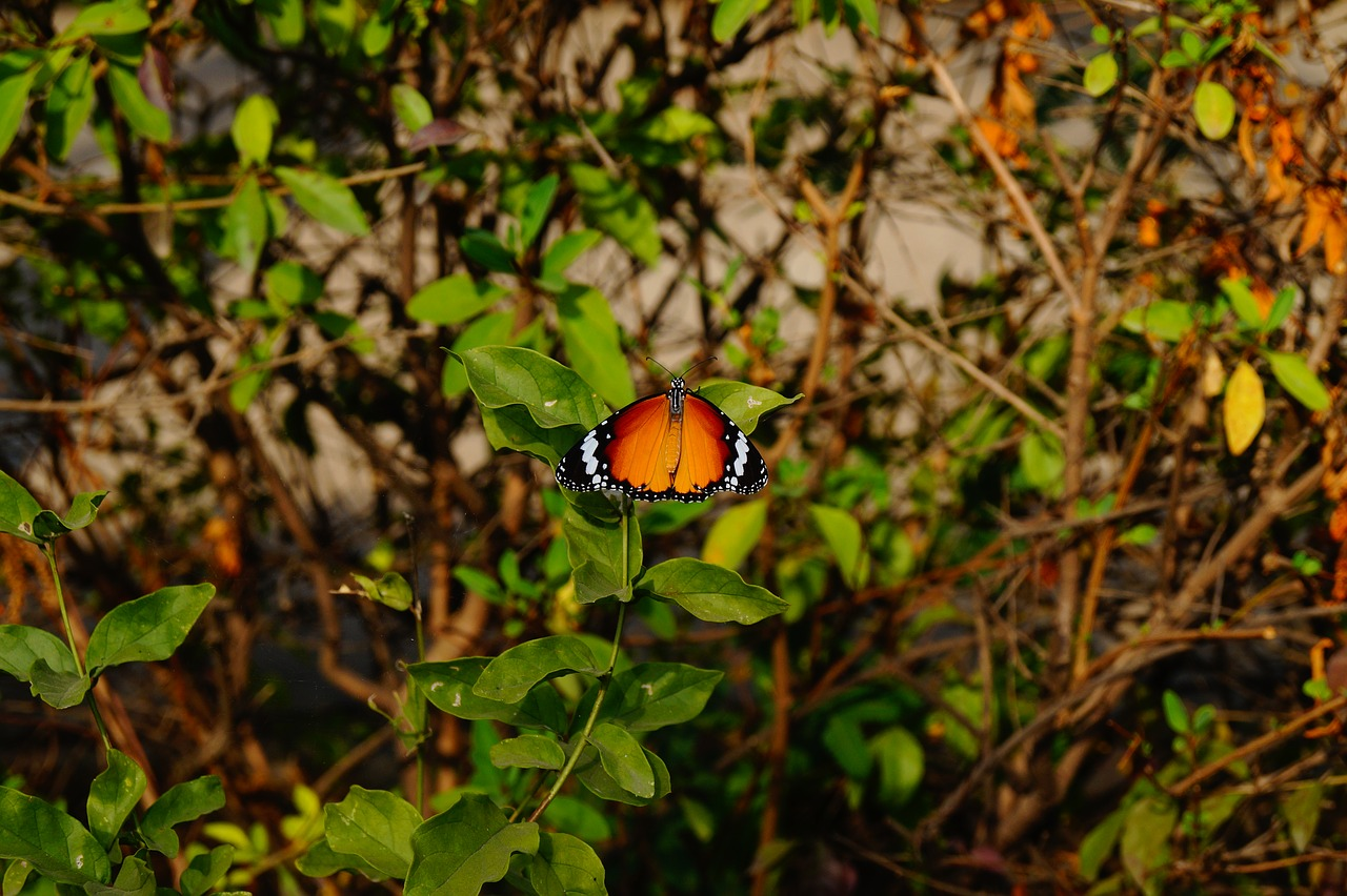 Butterfly Nature Wallpaper Beauty Free Pictures Free Image