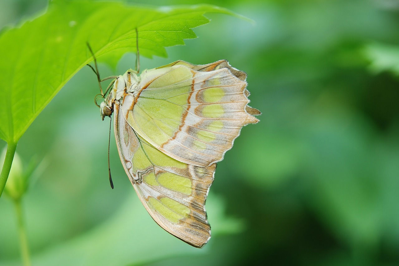 butterfly insect wing free photo