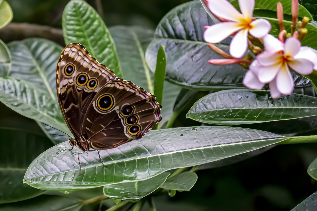 butterfly  nature  plant free photo