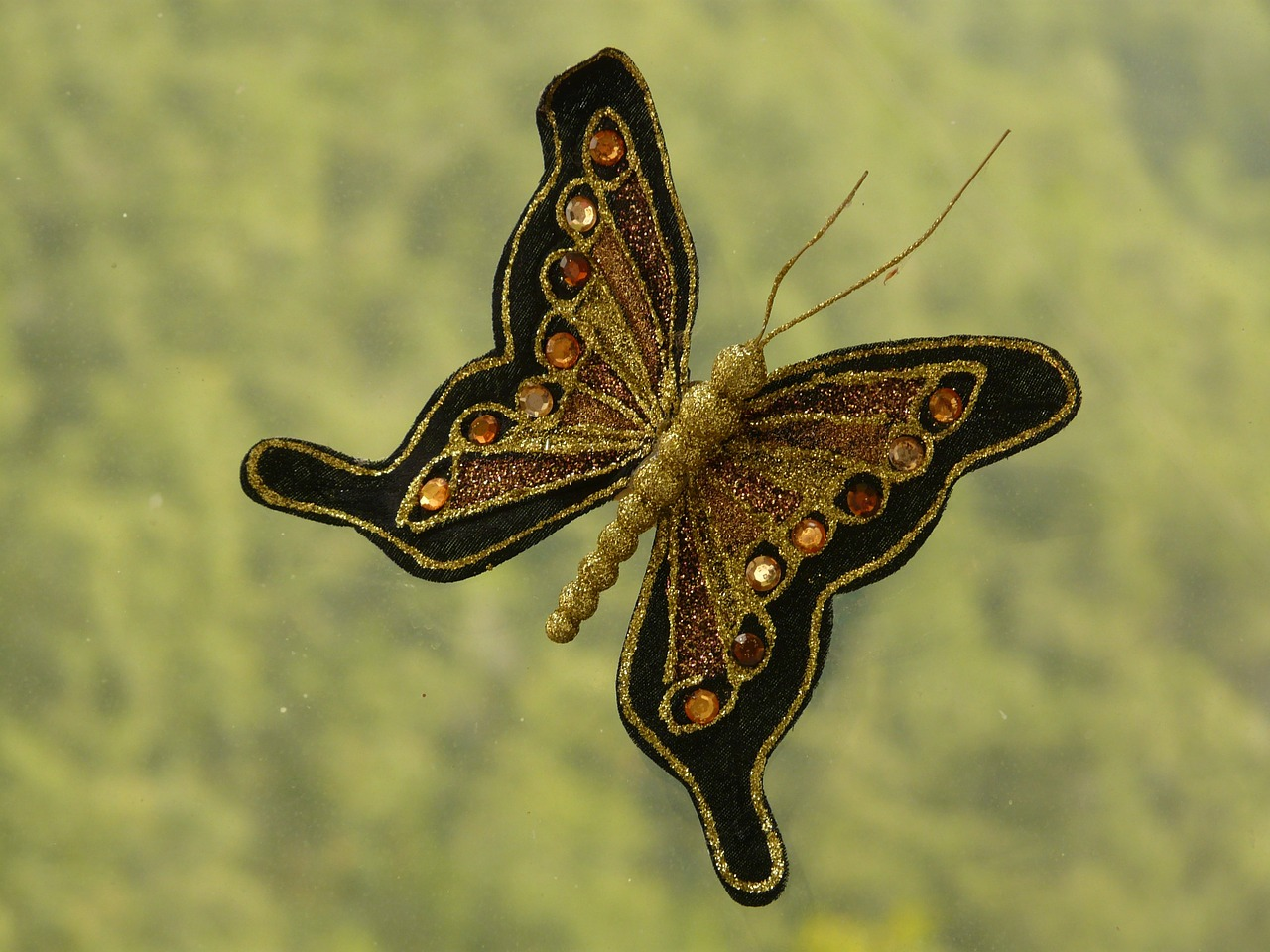 butterfly brooch jewellery free picture