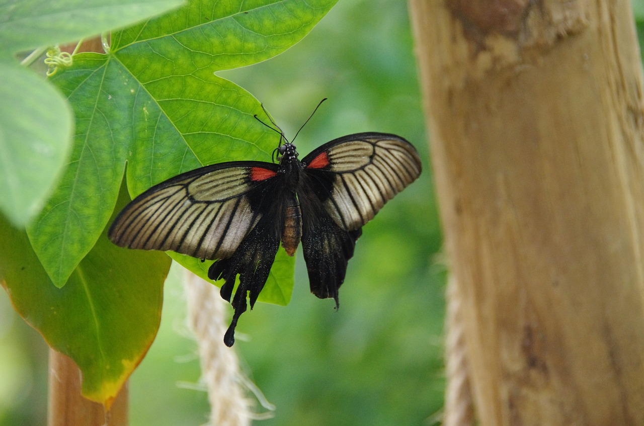 butterfly butterlfy park mariposario de benalmadena free picture