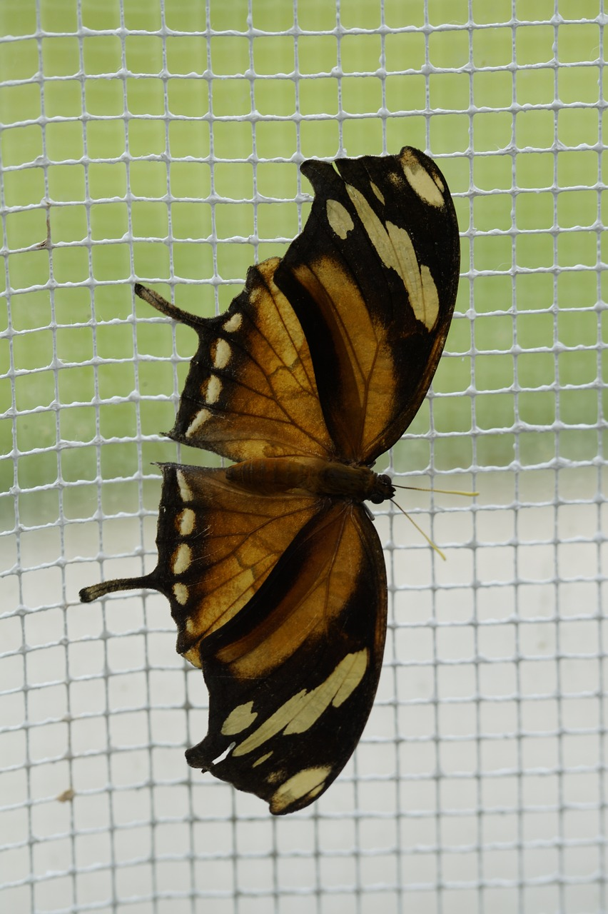 butterfly tropical exotic free photo