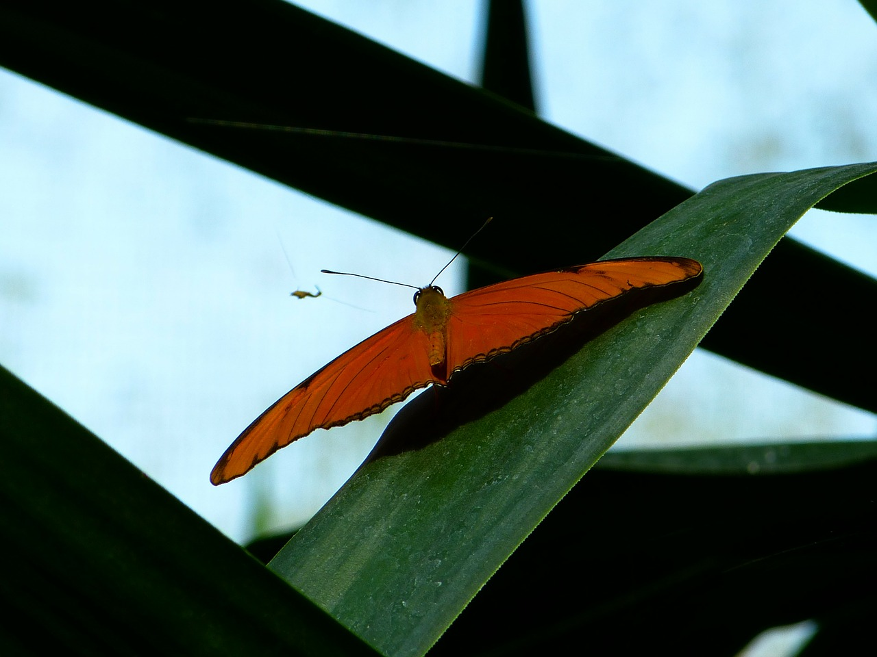 butterfly fly wing free photo