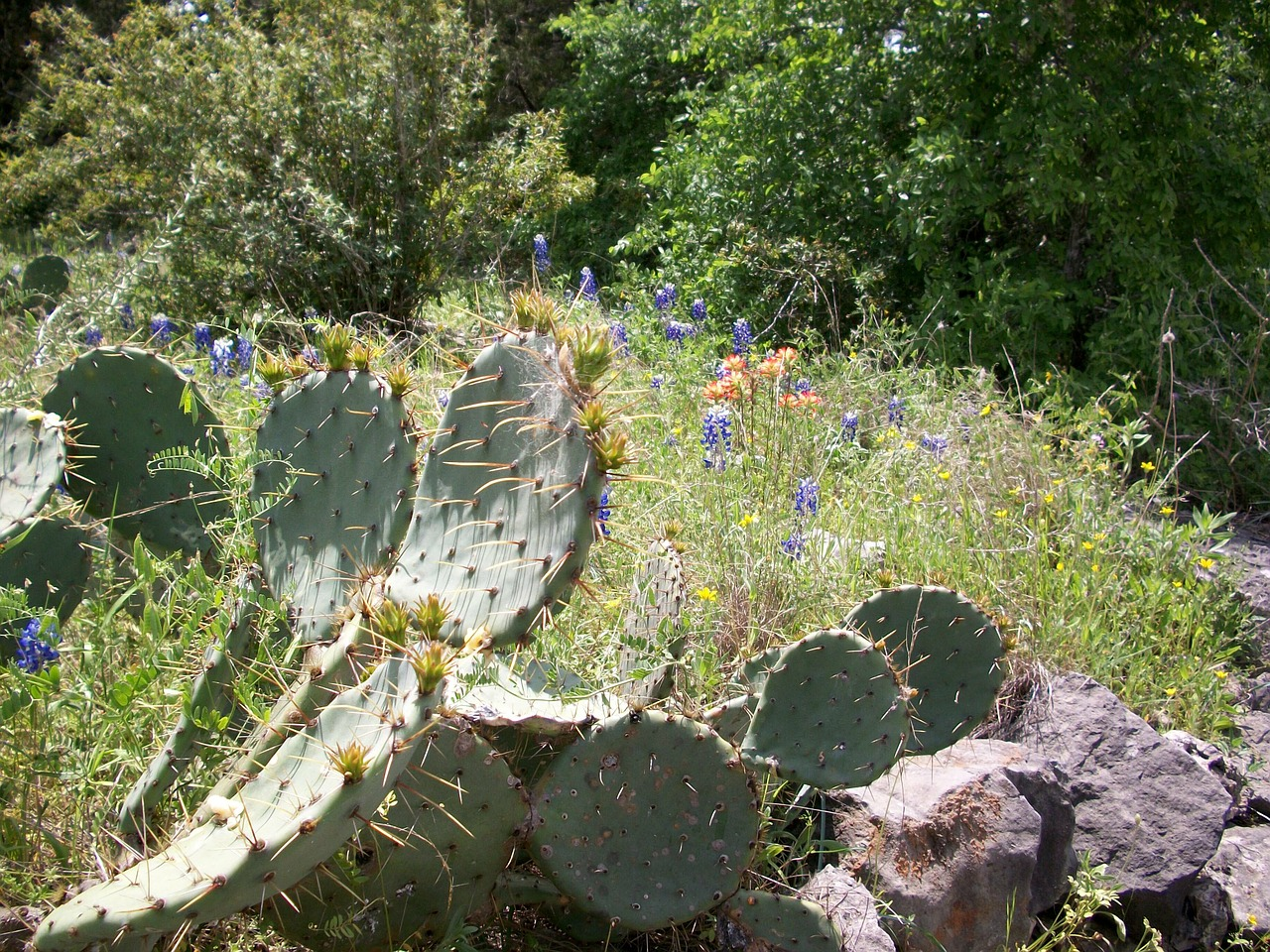 cactus rocks wildflowers free picture