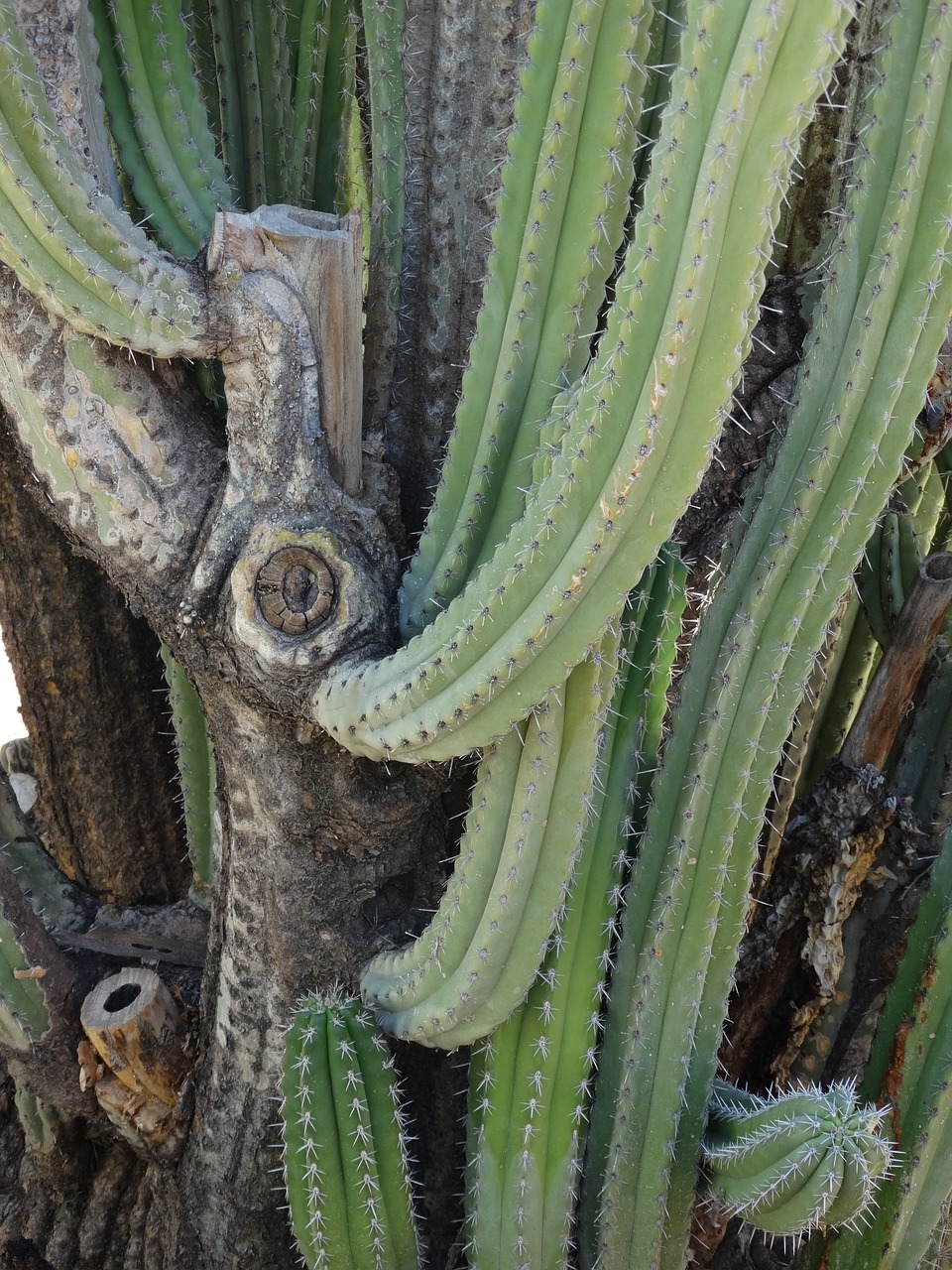 CACTUS PRICKLY DESERT PLANT FREE PICTURES FREE PHOTO FROM