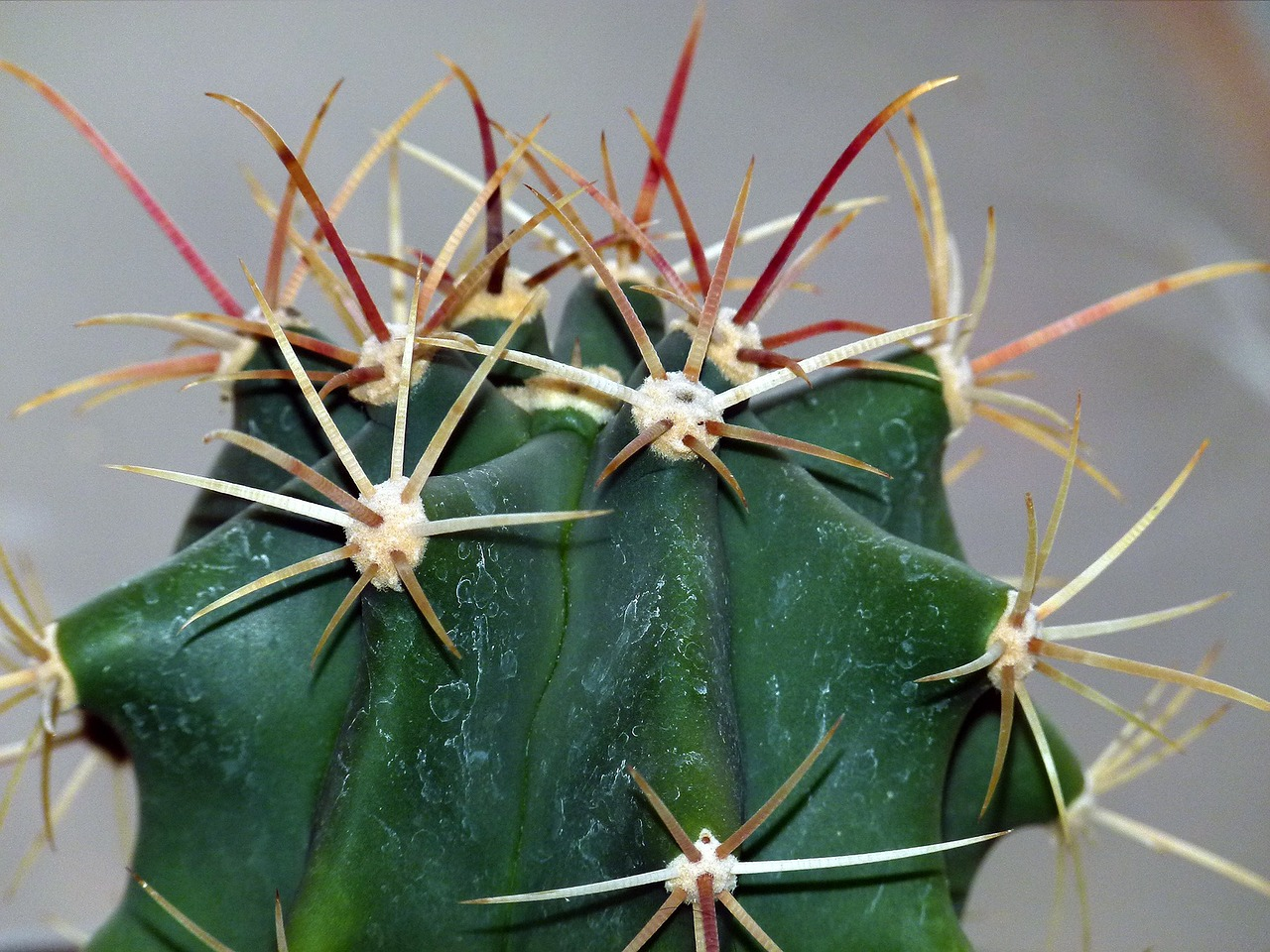 cactus succulent plant free photo