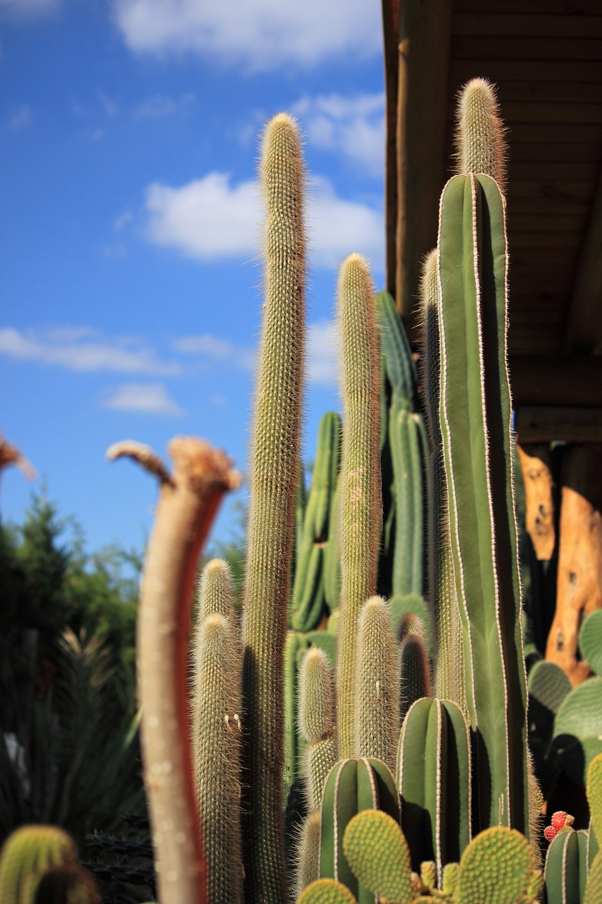 cactus thorns desert free photo