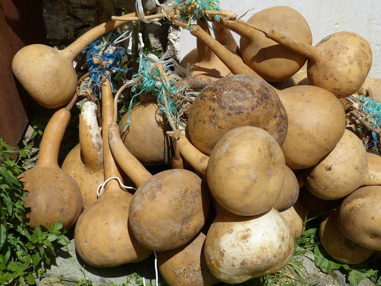 calabash pumpkin art cucurbitaceae free photo