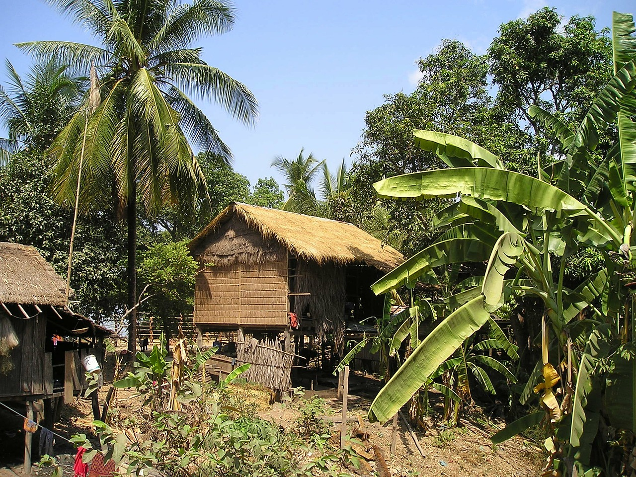 cambodia hut palm trees free picture