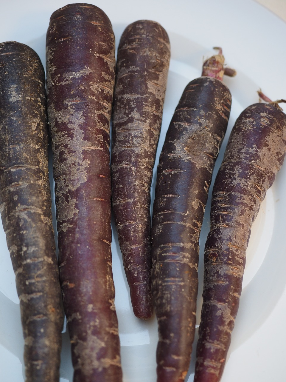 carrots red carrots purple free photo
