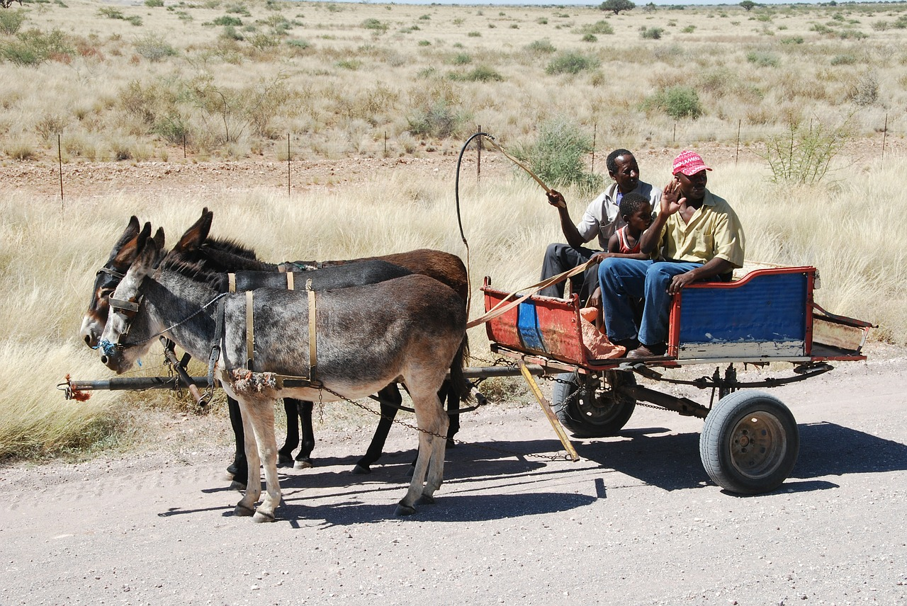 cart donkey cart donkey free photo
