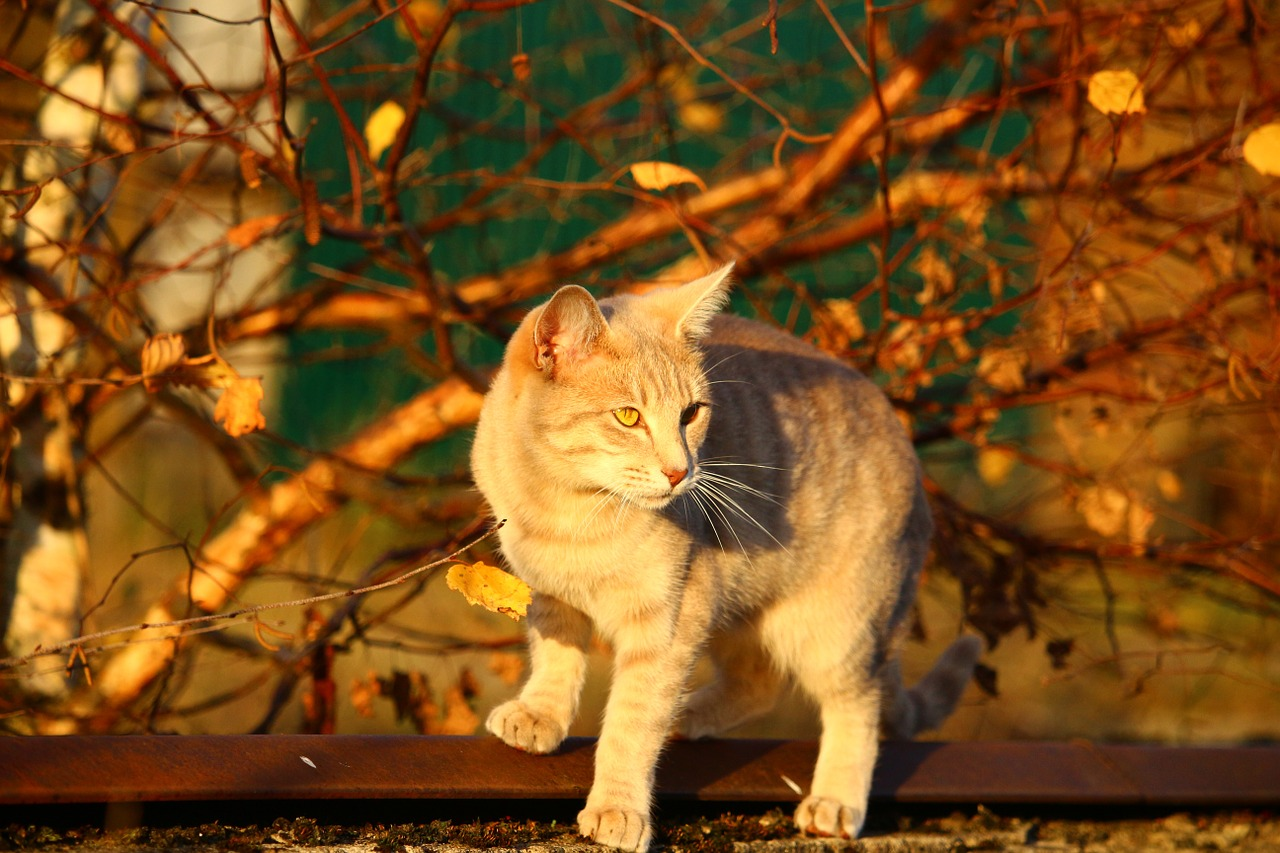 cat autumn evening light