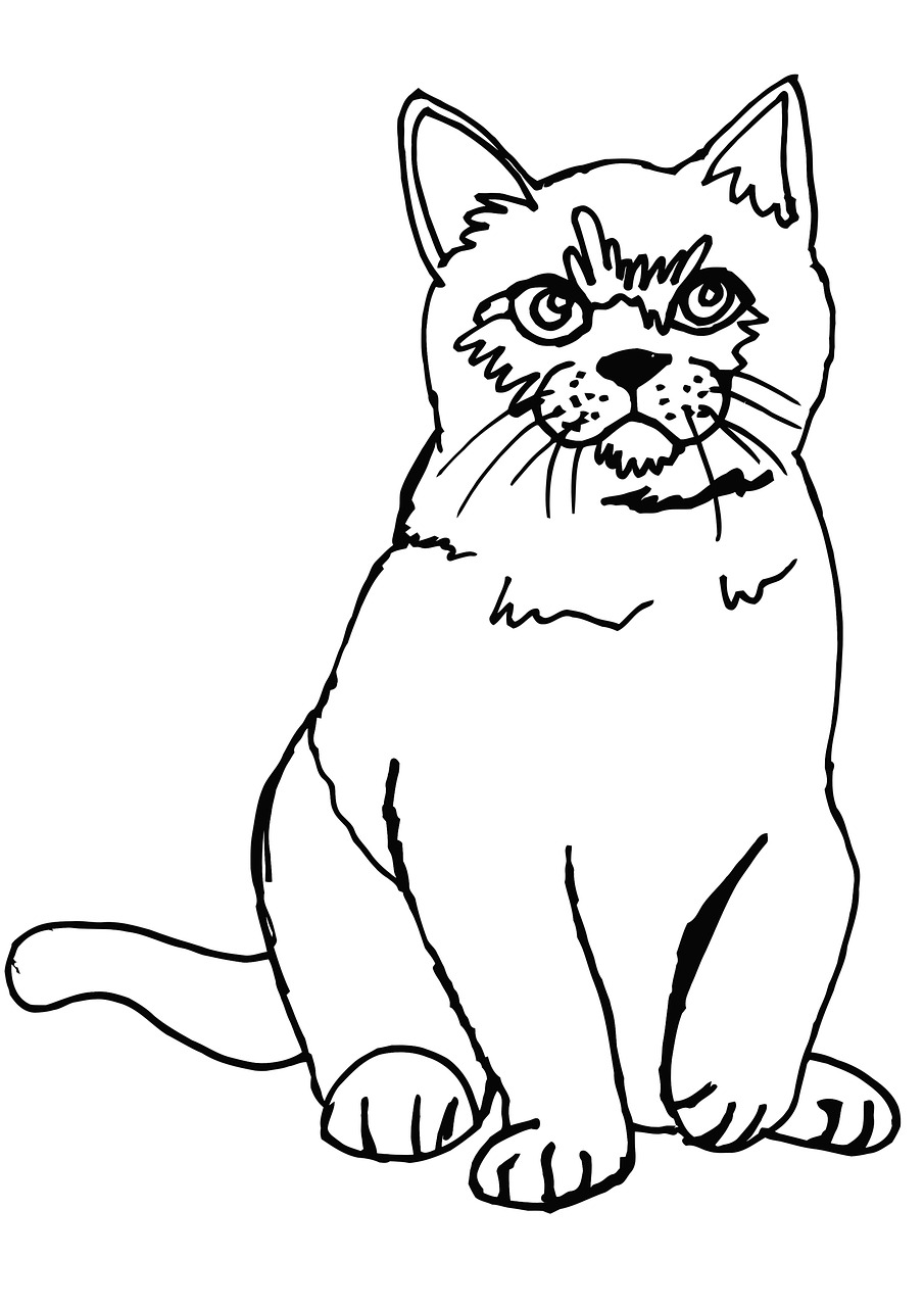 Cat,fluffy,coloring page,coloring,cute - free photo from needpix.com