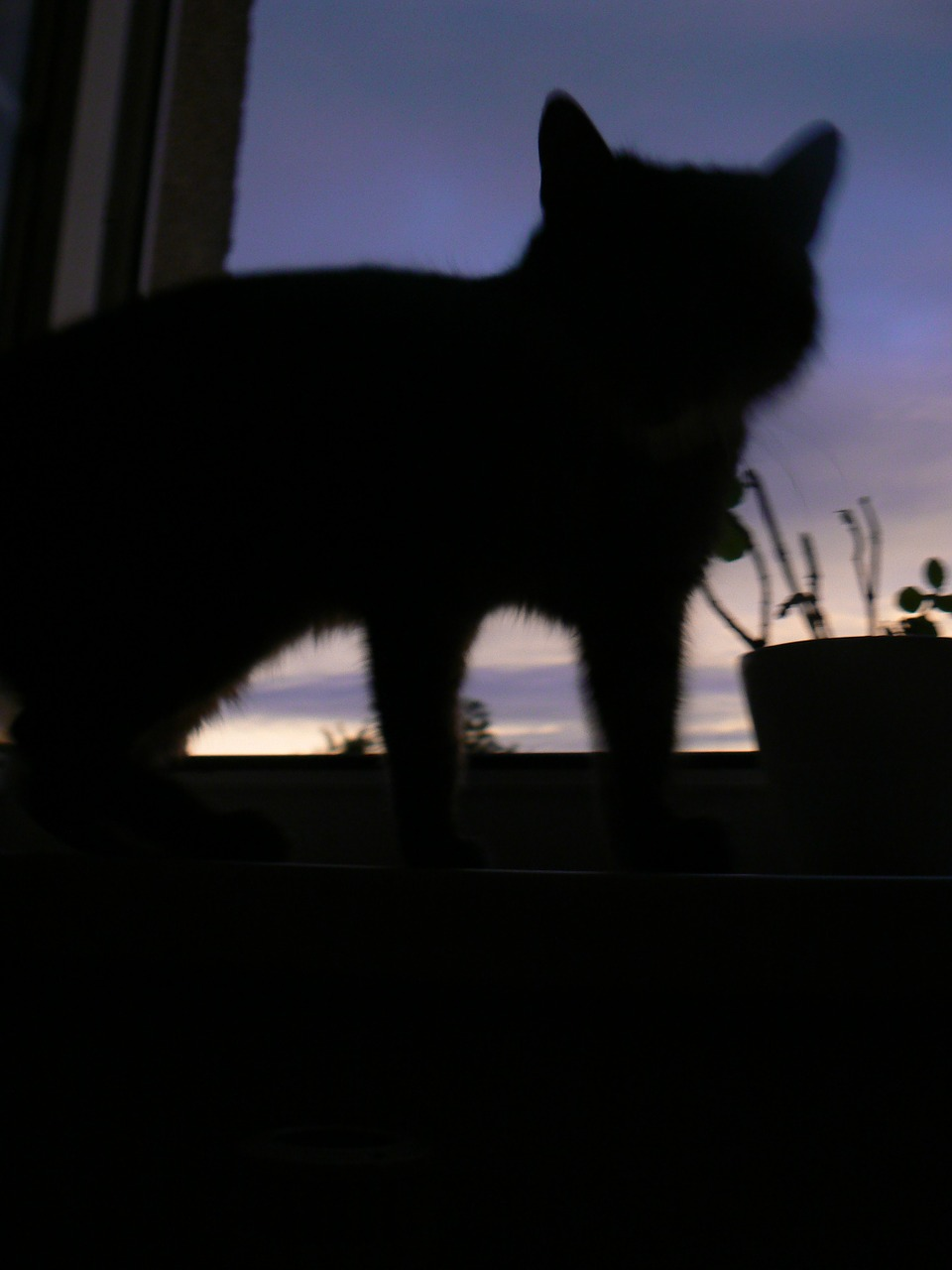 cat silhouette shadow free photo