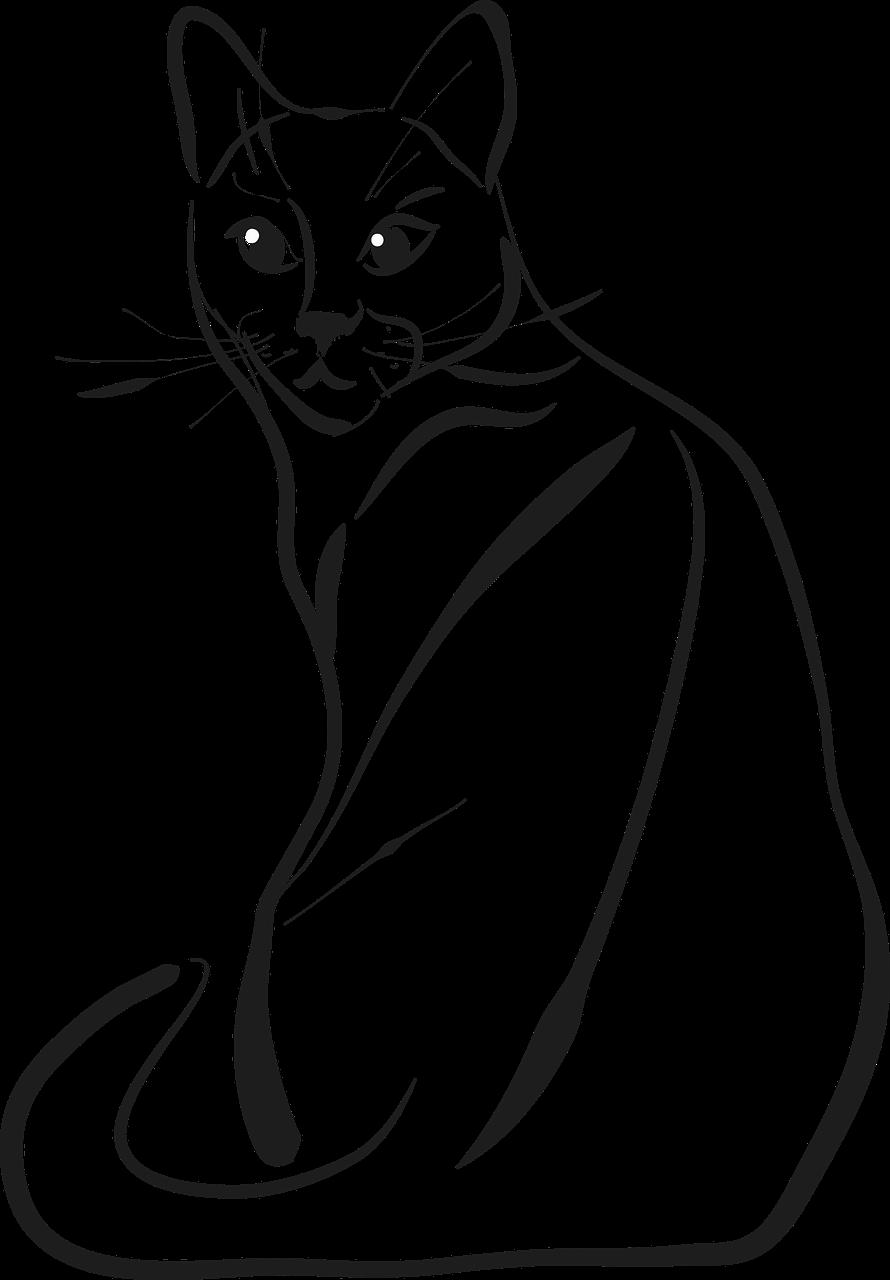 изображение кошки рисунок лучшие сорта садовой