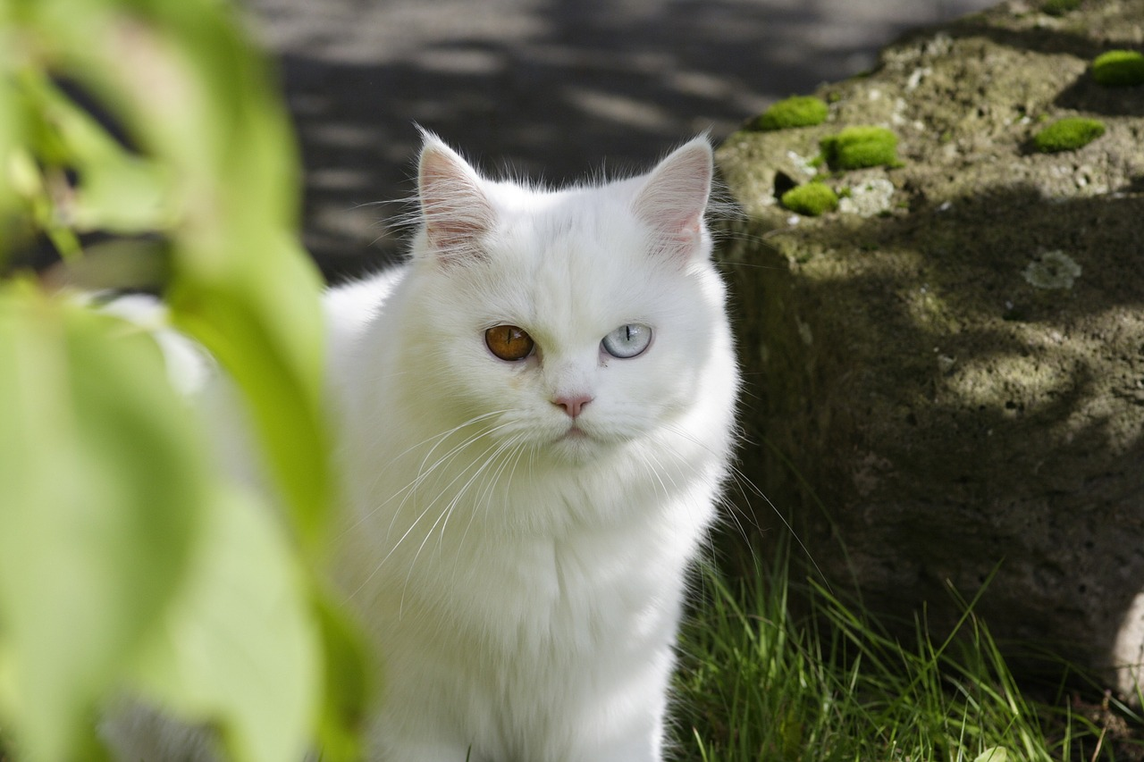 cat domestic cat ekh free photo
