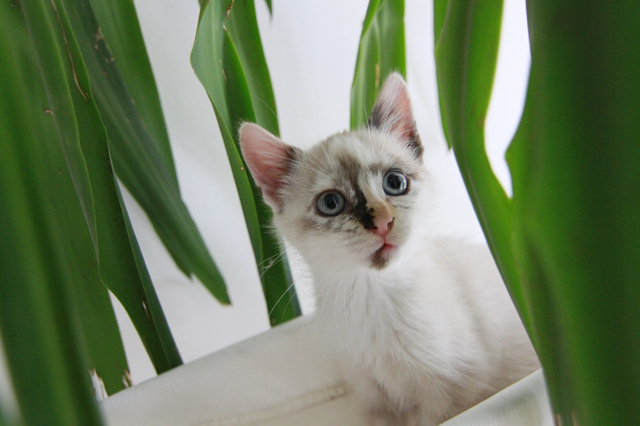 cat pet kitten free photo