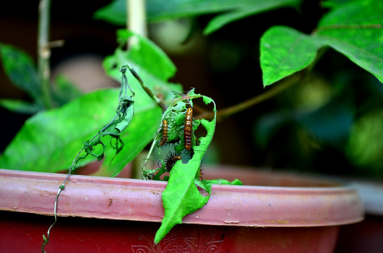 caterpillars eating leaves free photo