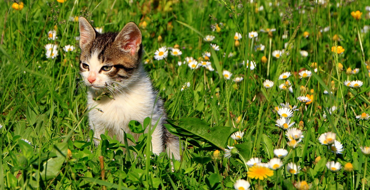 cats garden grass free photo