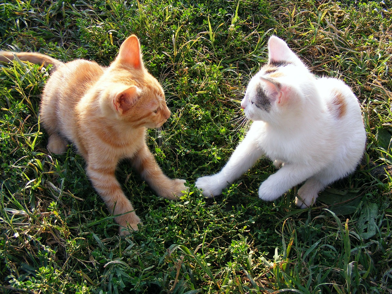 cats funny kittens free photo