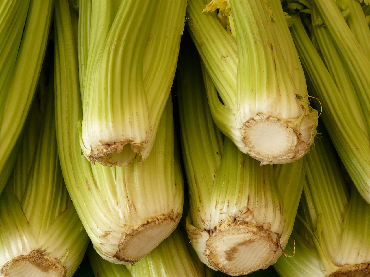 celery vegetables green free photo