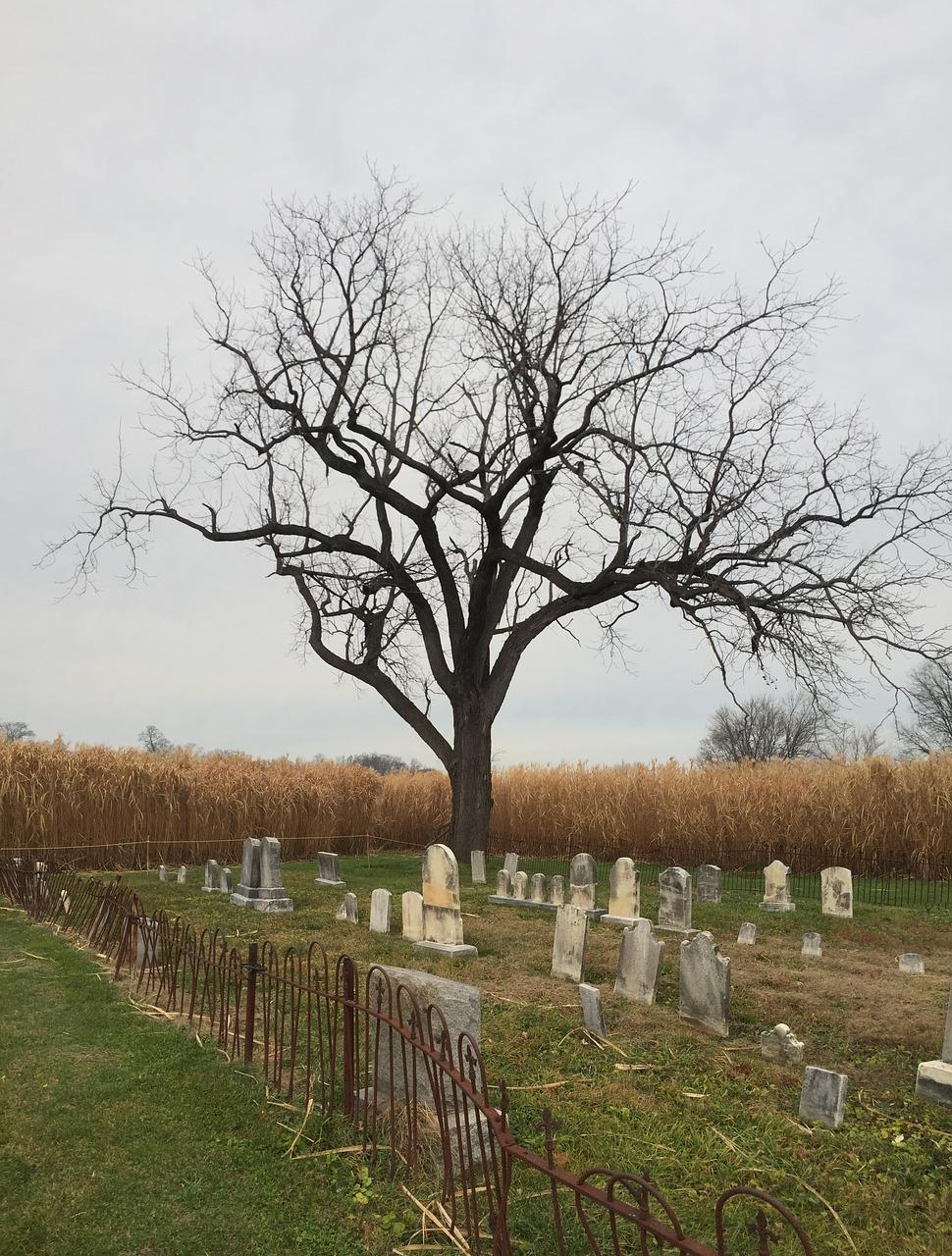 cemetery,tree,october,halloween,graveyard - free photo from needpix