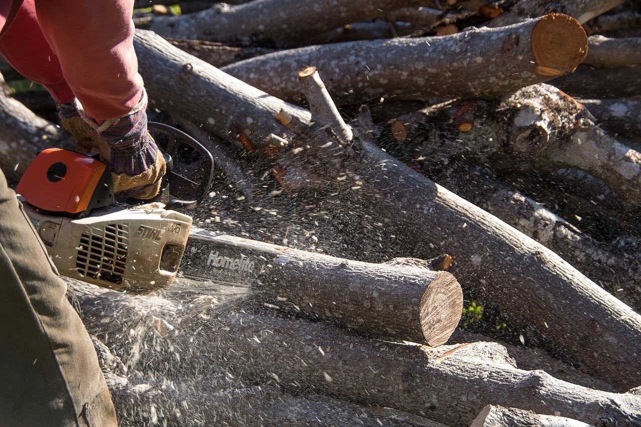 chainsaw, saw, tool, power, cutting, tree, branch, sawdust,free pictures, free photos, free images, royalty free, free illustrations, public domain