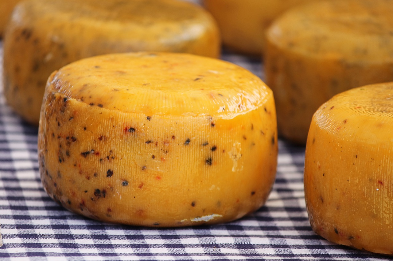cheese loaf  cheese  round free photo