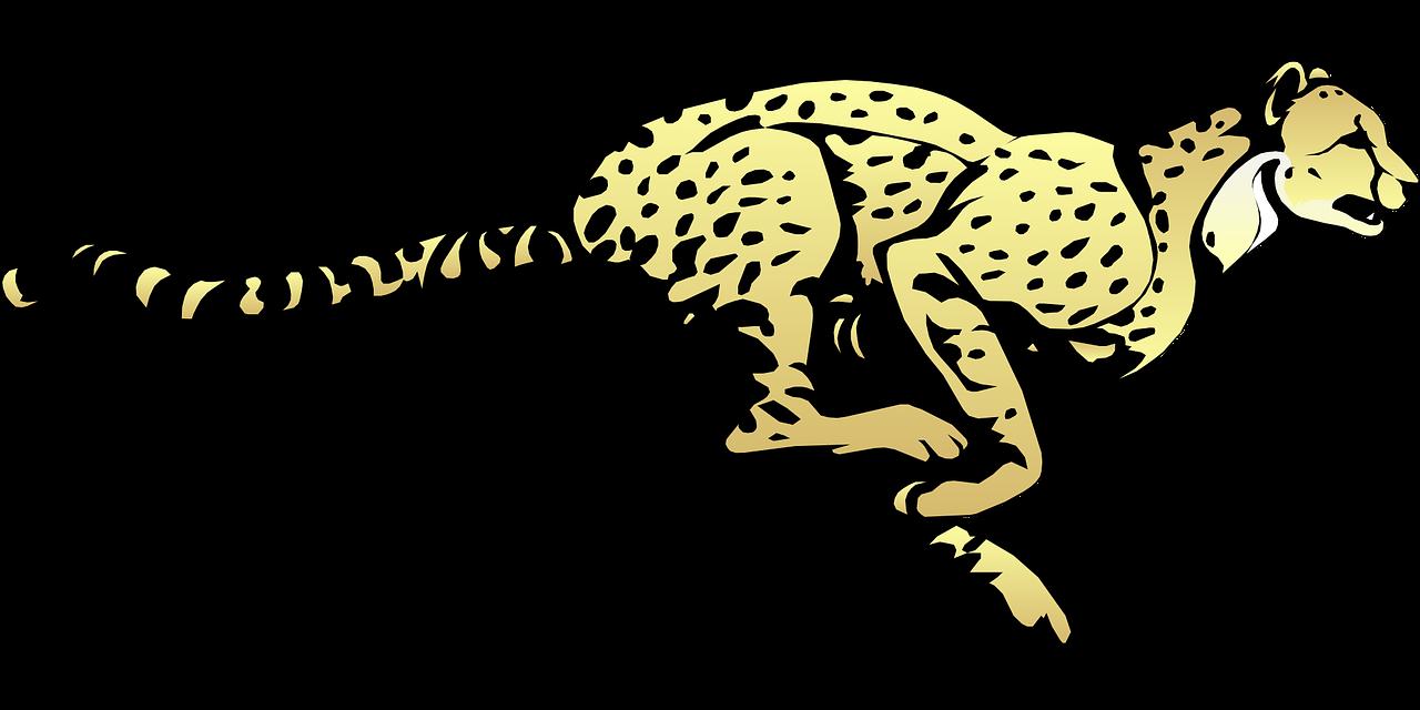 cheetah running speed free photo