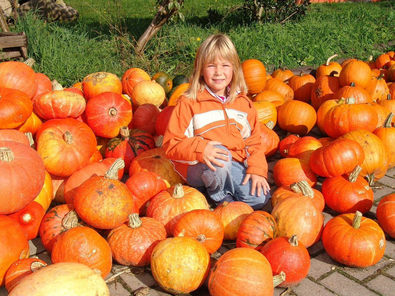child,pumpkin,orange,autumn,halloween,nature,free pictures, free photos, free images, royalty free, free illustrations, public domain