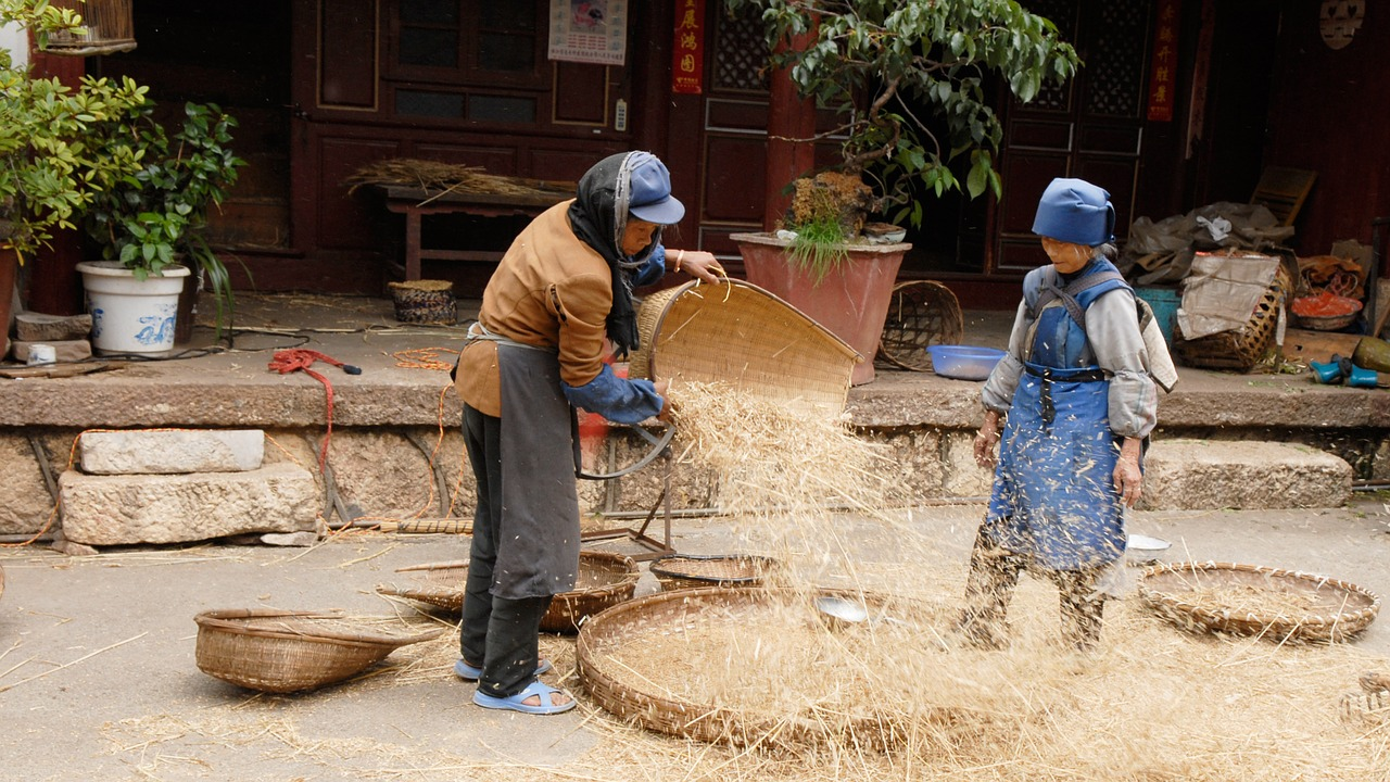 china agriculture harvest free photo