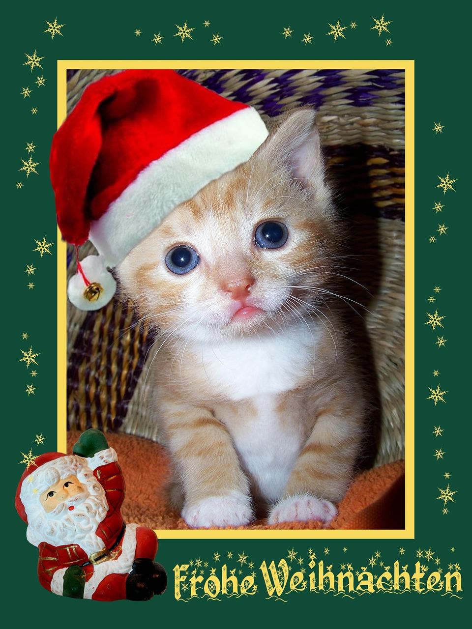 Frohe Weihnachten Katze.Kalėdos Kalėdinis Atvirukas Kalėdų Sveikinimas žvaigždė Atvirukas