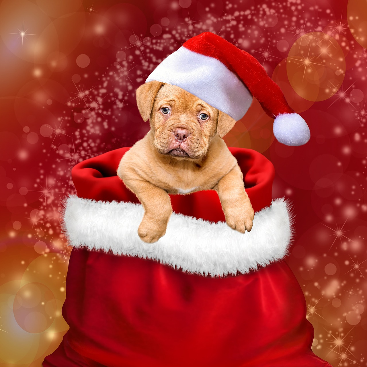 christmas gifts dogs free photo