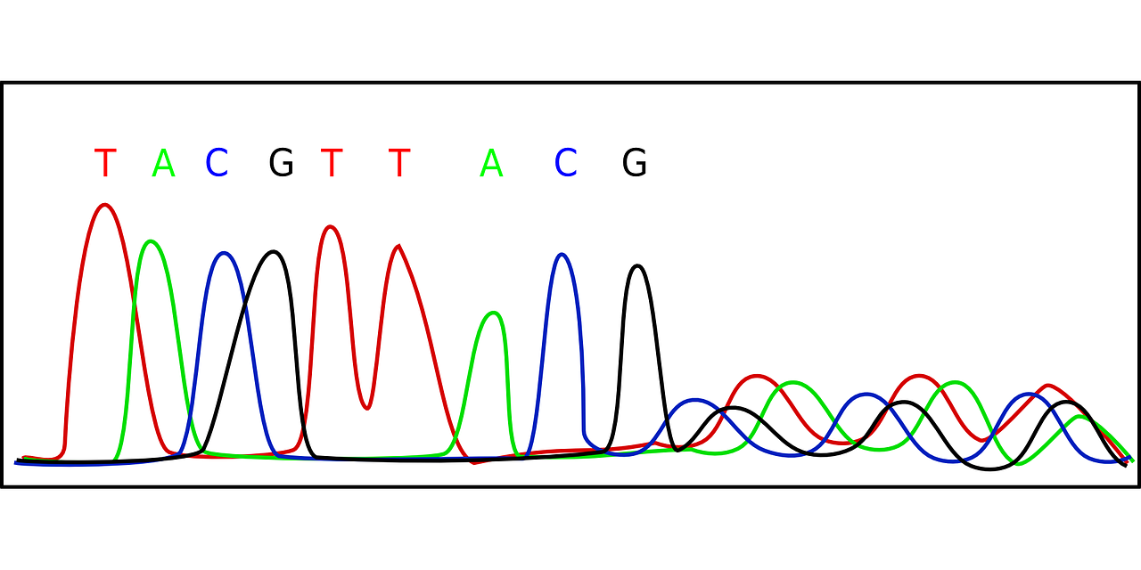 chromatogram biology dna free photo